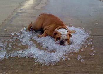 Coup de chaleur chien