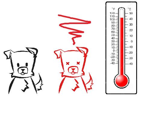Temperature chien
